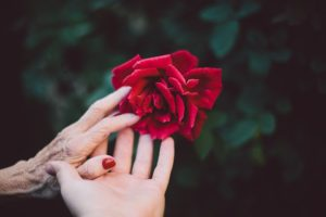 bloom-1846200_960_720